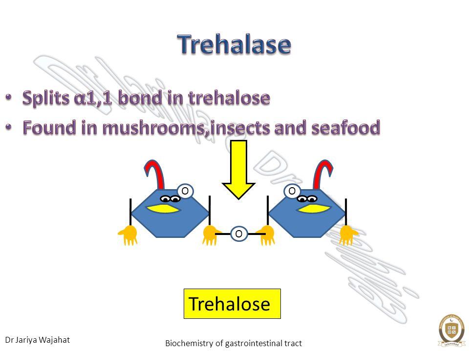 Trehalase Splits α1,1 bond in trehalose