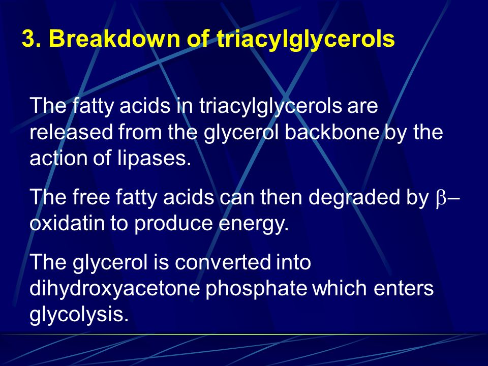 3. Breakdown of triacylglycerols
