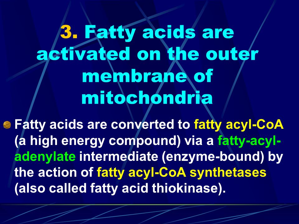 3. Fatty acids are activated on the outer membrane of mitochondria