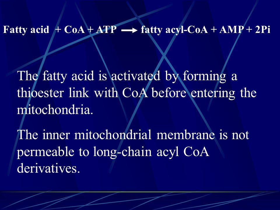 Fatty acid + CoA + ATP fatty acyl-CoA + AMP + 2Pi