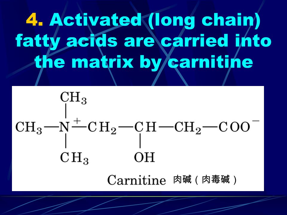 4. Activated (long chain) fatty acids are carried into the matrix by carnitine