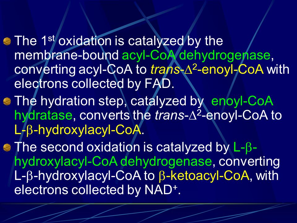 The 1st oxidation is catalyzed by the membrane-bound acyl-CoA dehydrogenase, converting acyl-CoA to trans-2-enoyl-CoA with electrons collected by FAD.