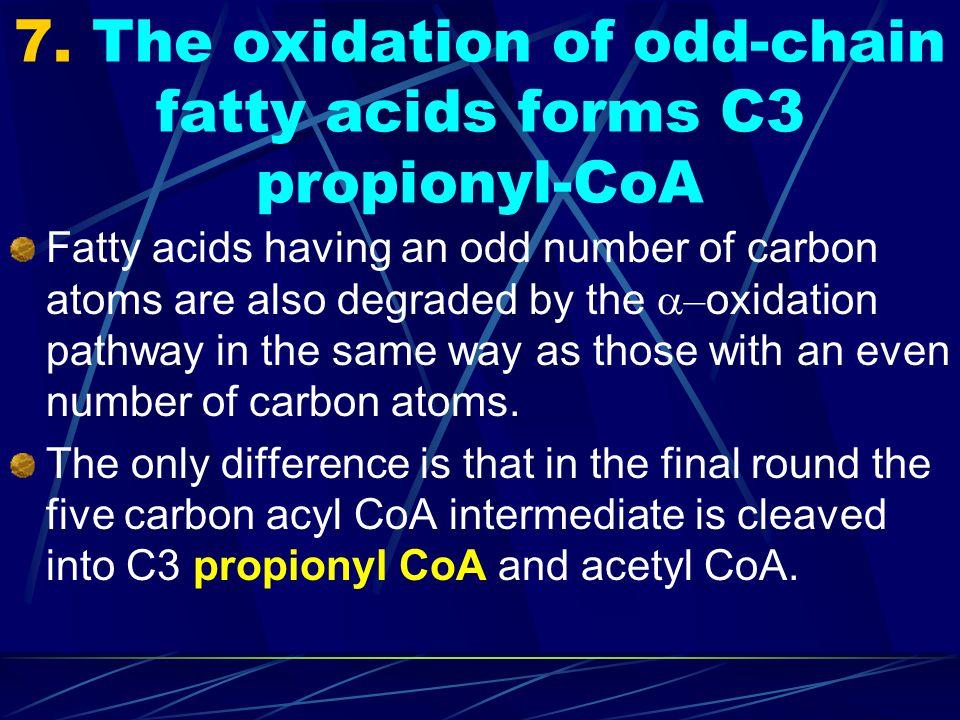 7. The oxidation of odd-chain fatty acids forms C3 propionyl-CoA