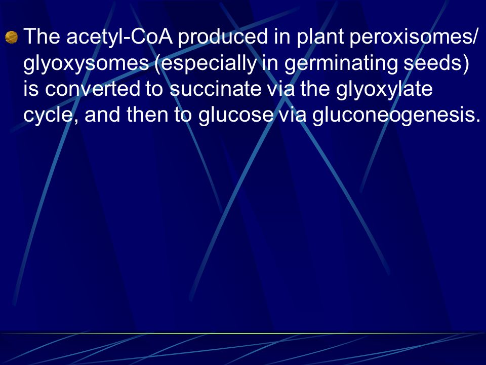The acetyl-CoA produced in plant peroxisomes/ glyoxysomes (especially in germinating seeds) is converted to succinate via the glyoxylate cycle, and then to glucose via gluconeogenesis.