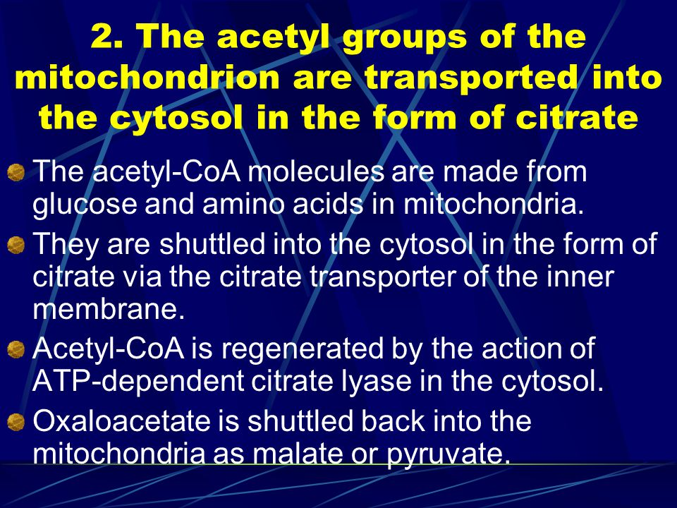 2. The acetyl groups of the mitochondrion are transported into the cytosol in the form of citrate