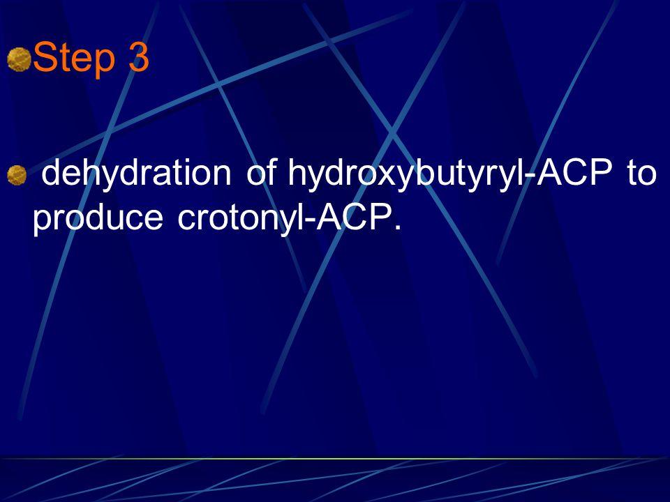 Step 3 dehydration of hydroxybutyryl-ACP to produce crotonyl-ACP.