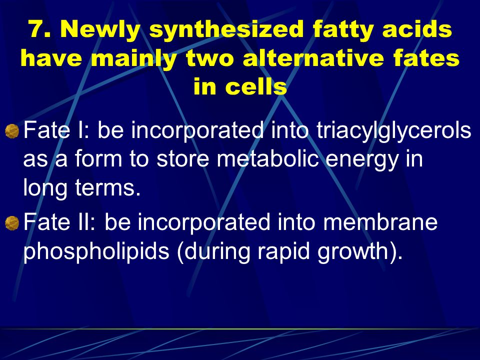 7. Newly synthesized fatty acids have mainly two alternative fates in cells