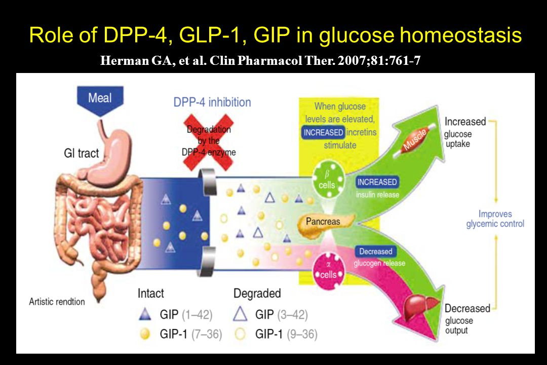 Role of DPP-4, GLP-1, GIP in glucose homeostasis