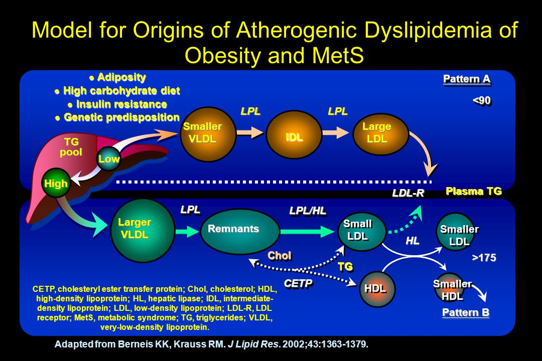 Model for Origins of Atherogenic Dyslipidemia of Obesity and MetS