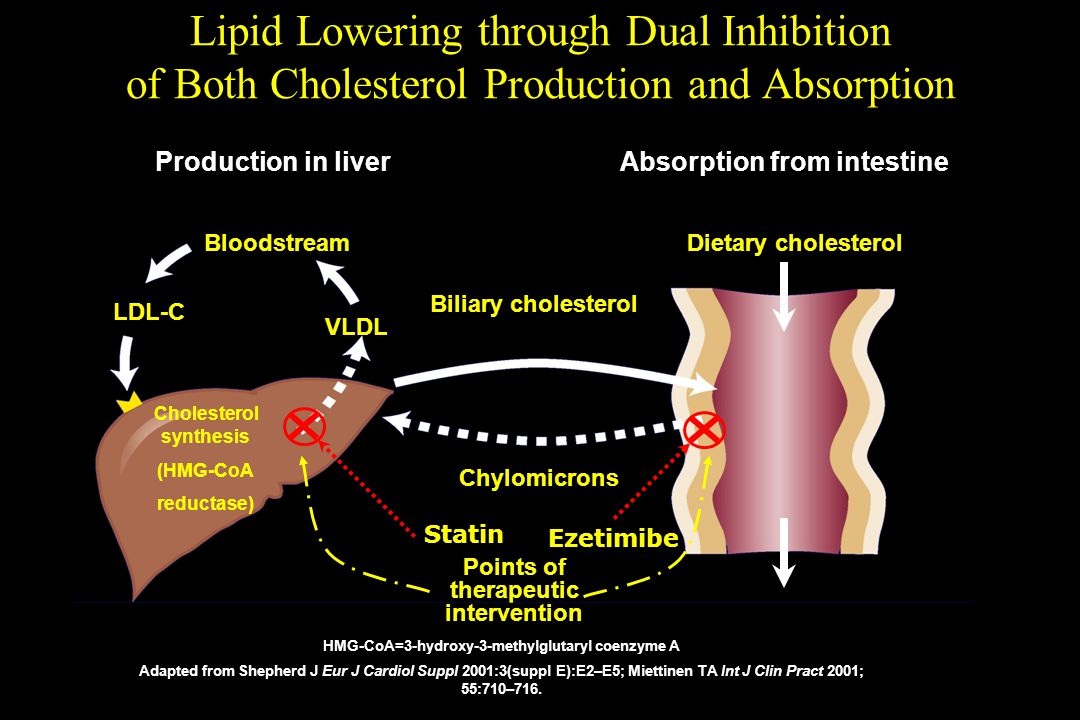 Lipid Lowering through Dual Inhibition of Both Cholesterol Production and Absorption