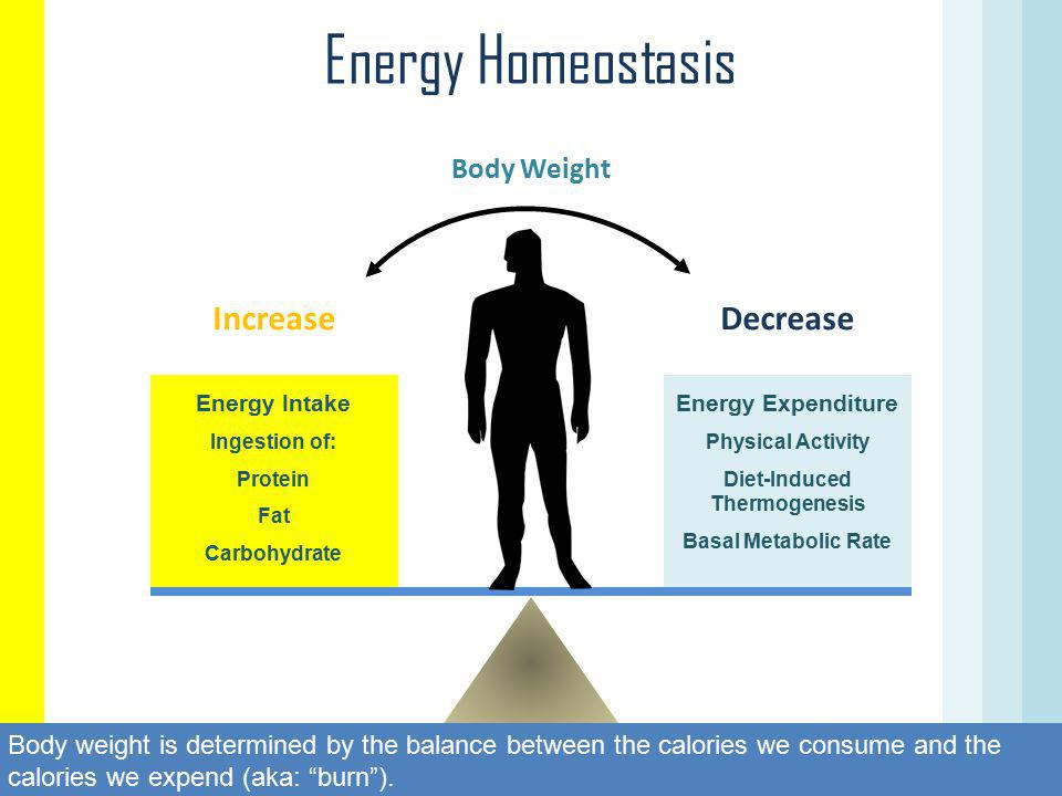 Diet-Induced Thermogenesis