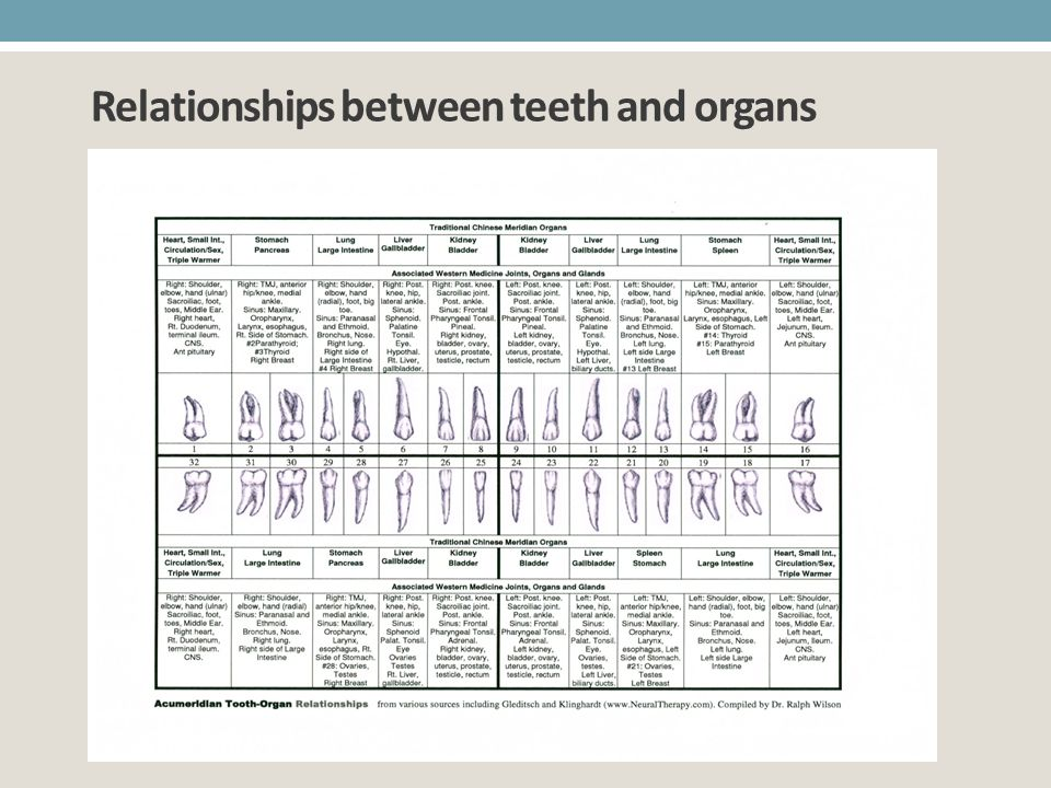 Relationships between teeth and organs