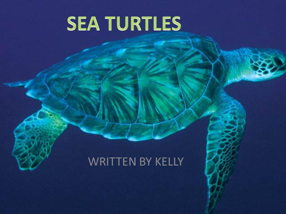 SEA TURTLES WRITTEN BY KELLY
