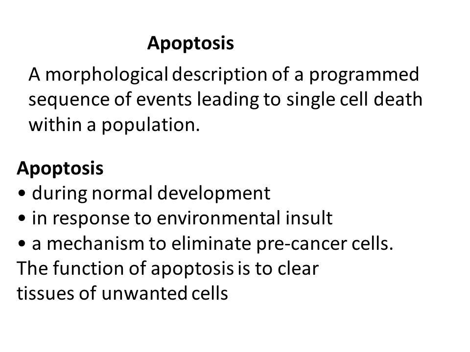 Apoptosis A morphological description of a programmed sequence of events leading to single cell death within a population.