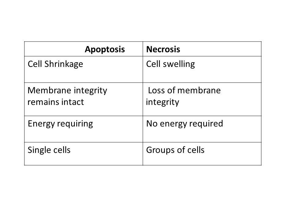 Necrosis Apoptosis. Cell swelling. Cell Shrinkage. Loss of membrane. integrity. Membrane integrity remains intact.