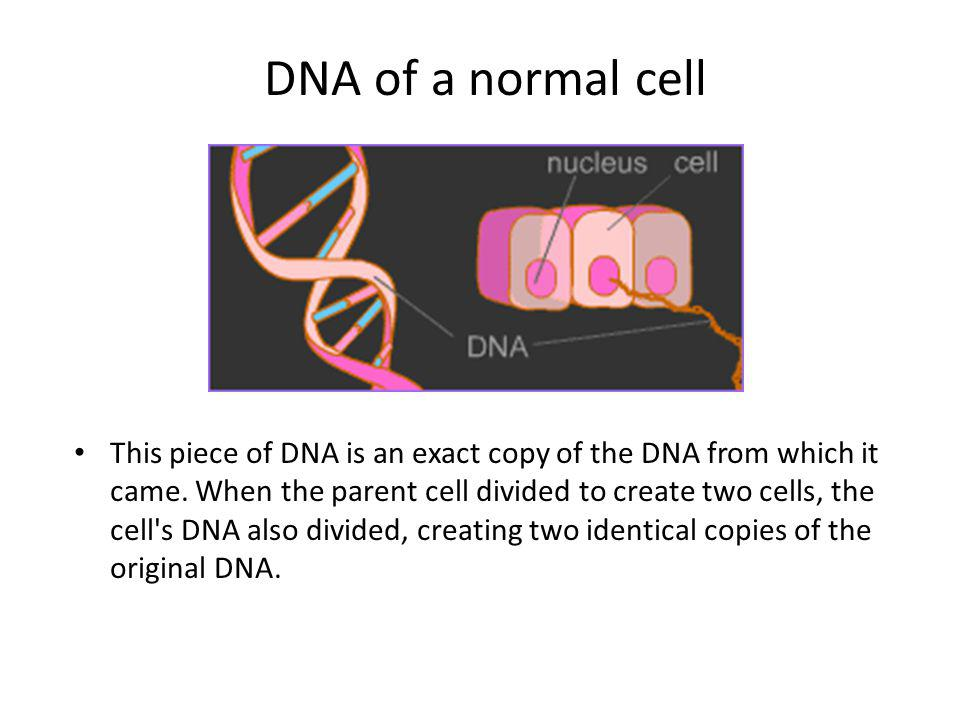 DNA of a normal cell