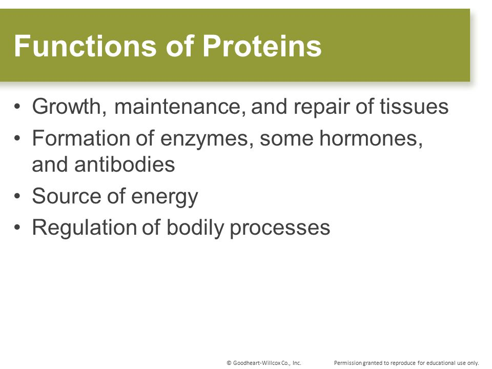 Functions of Proteins Growth, maintenance, and repair of tissues