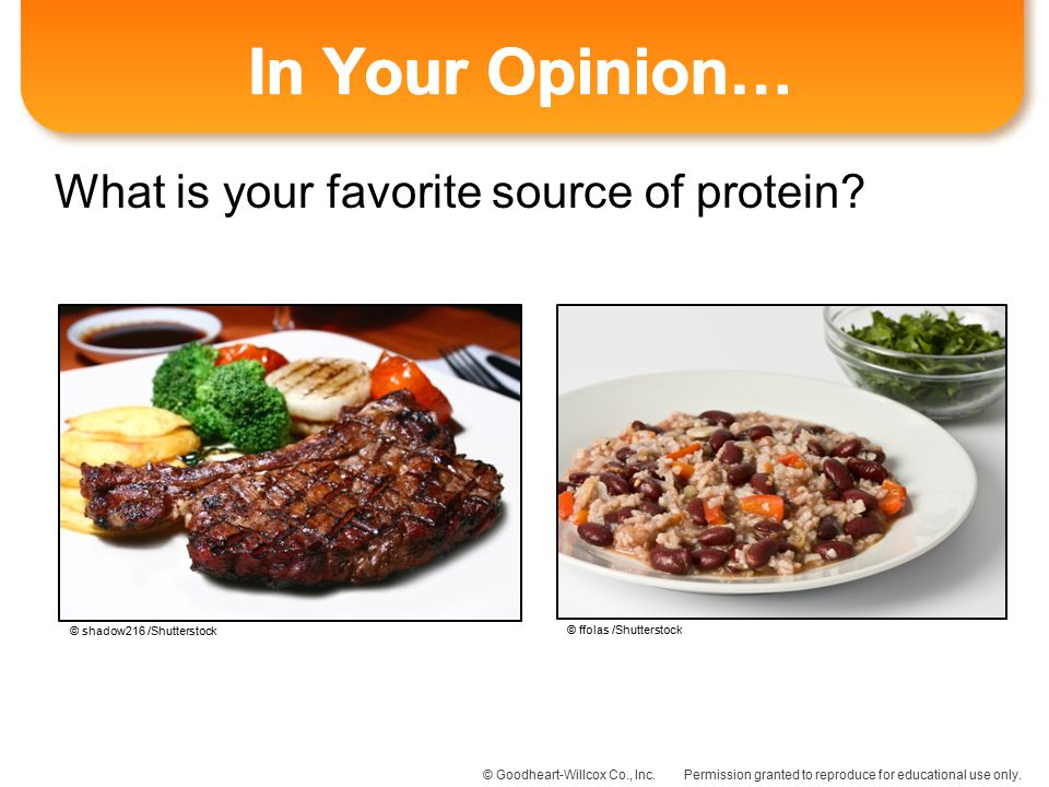 In Your Opinion… What is your favorite source of protein