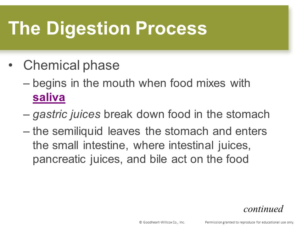 The Digestion Process Chemical phase