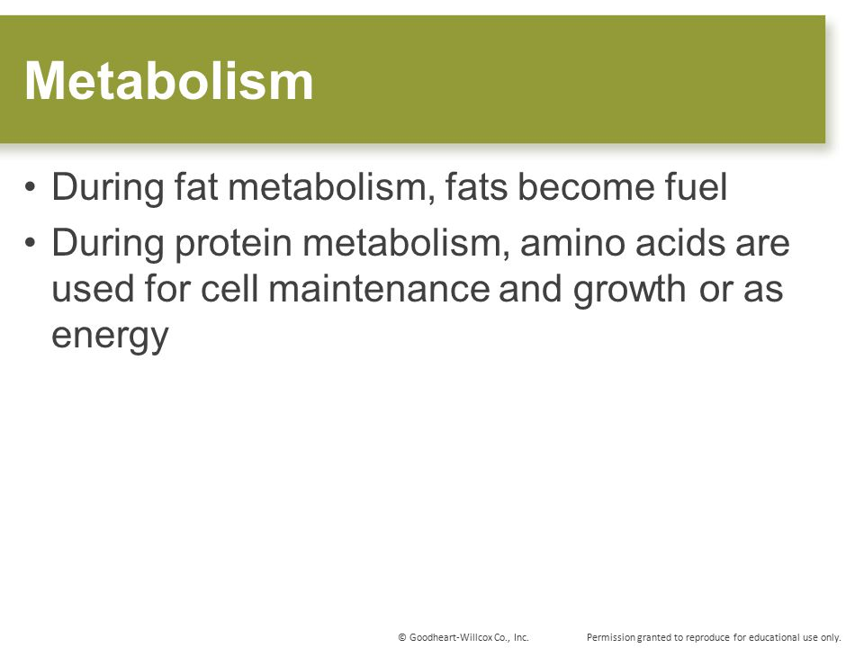 Metabolism During fat metabolism, fats become fuel