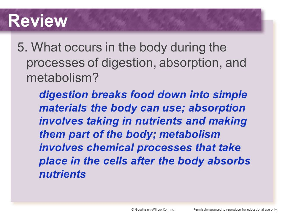 Review 5. What occurs in the body during the processes of digestion, absorption, and metabolism