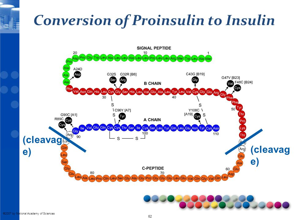 Conversion of Proinsulin to Insulin