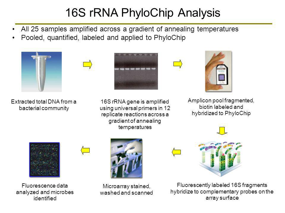 16S rRNA PhyloChip Analysis