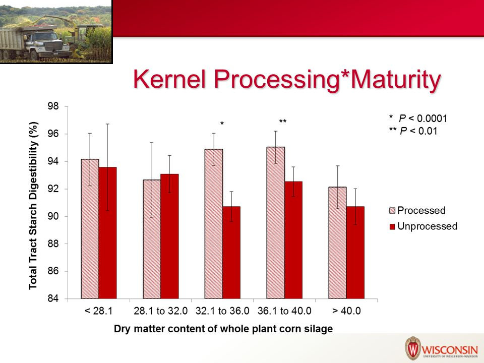 Kernel Processing*Maturity