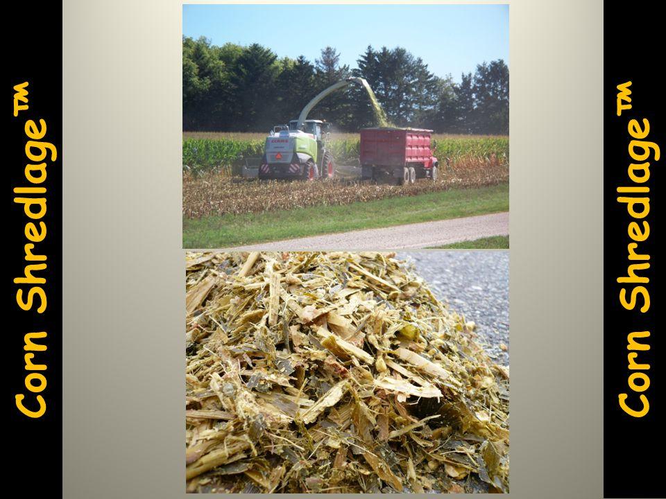 Corn Shredlage™ Corn Shredlage™