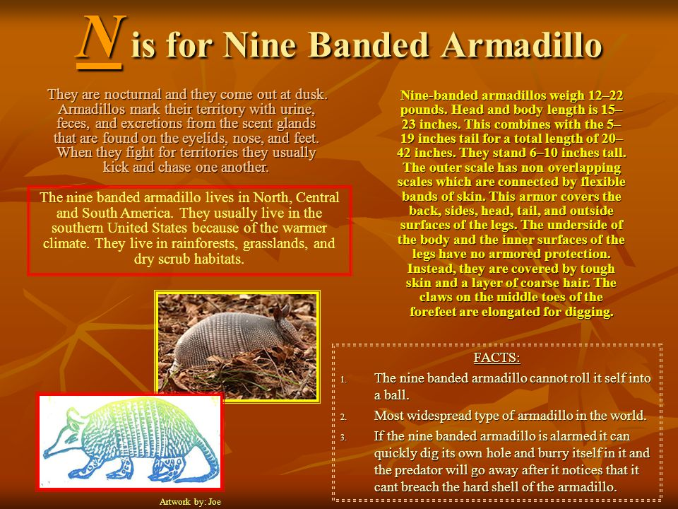 N is for Nine Banded Armadillo