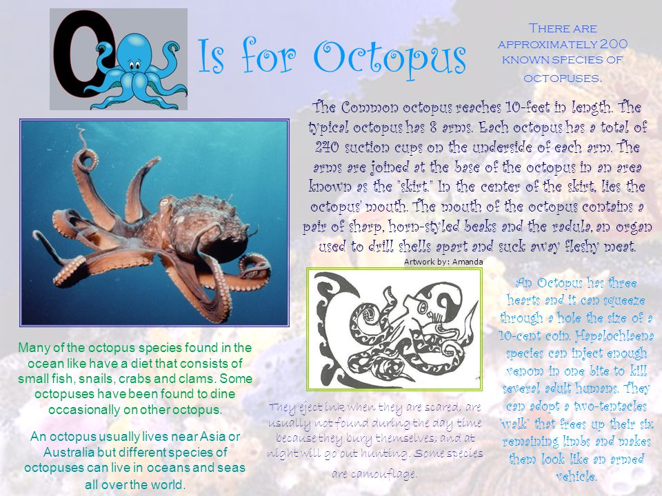 There are approximately 200 known species of octopuses.