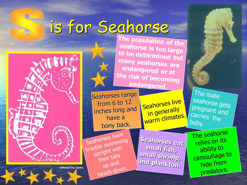is for Seahorse S The population of the seahorse is too large