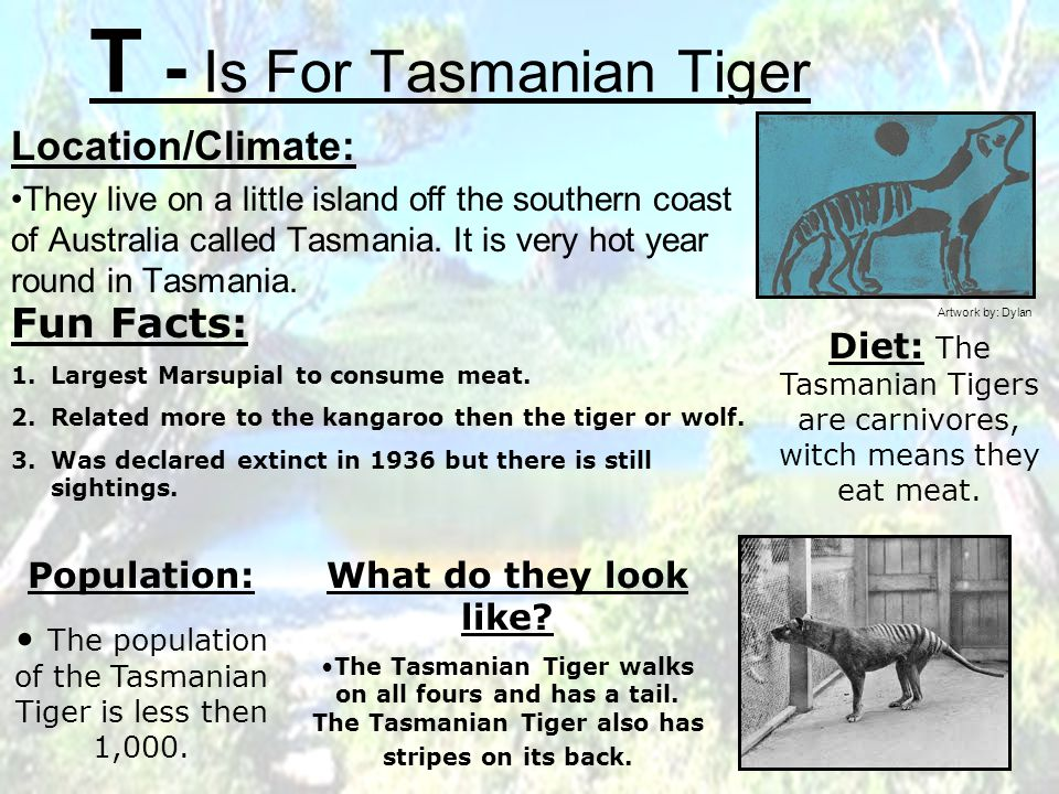 T - Is For Tasmanian Tiger