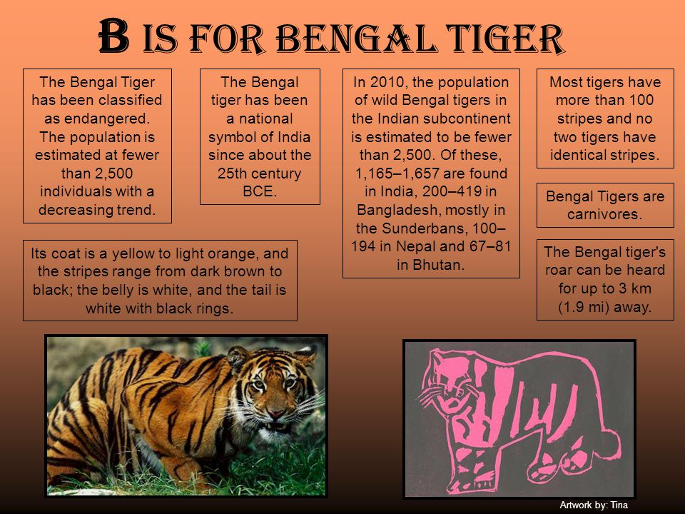 B is for Bengal tiger