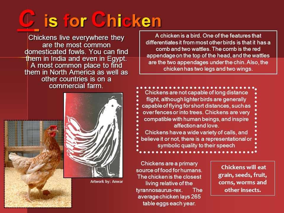 Chickens will eat grain, seeds, fruit, corns, worms and other insects.