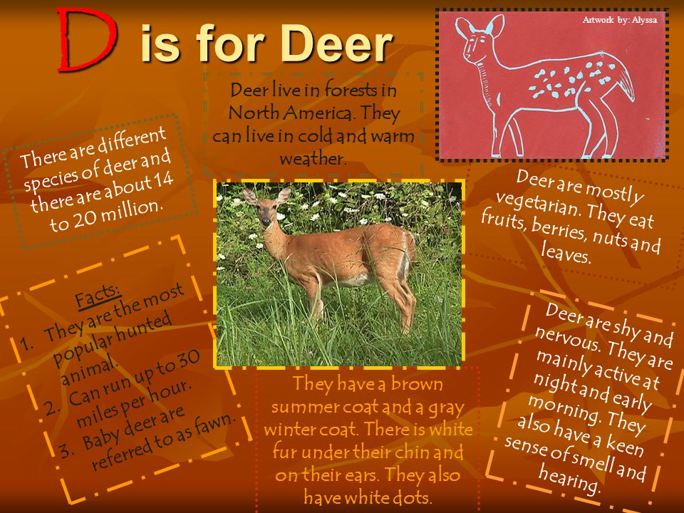 Deer are mostly vegetarian. They eat fruits, berries, nuts and leaves.
