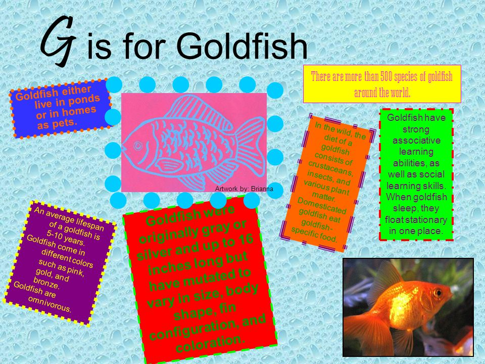 There are more than 500 species of goldfish around the world.