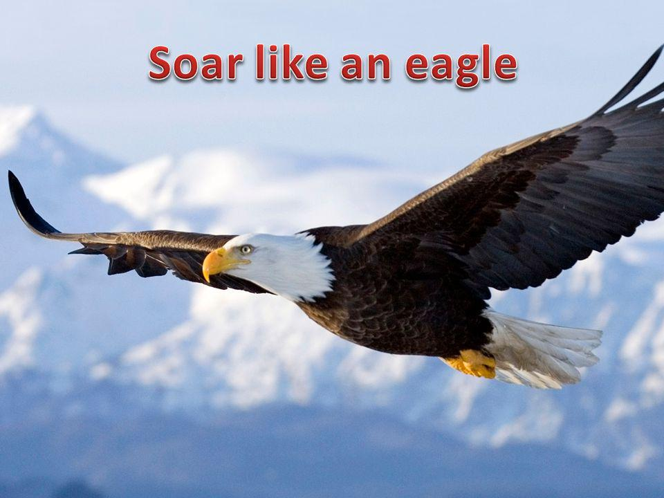 don t ignore look for dream about Soar like an eagle Problems