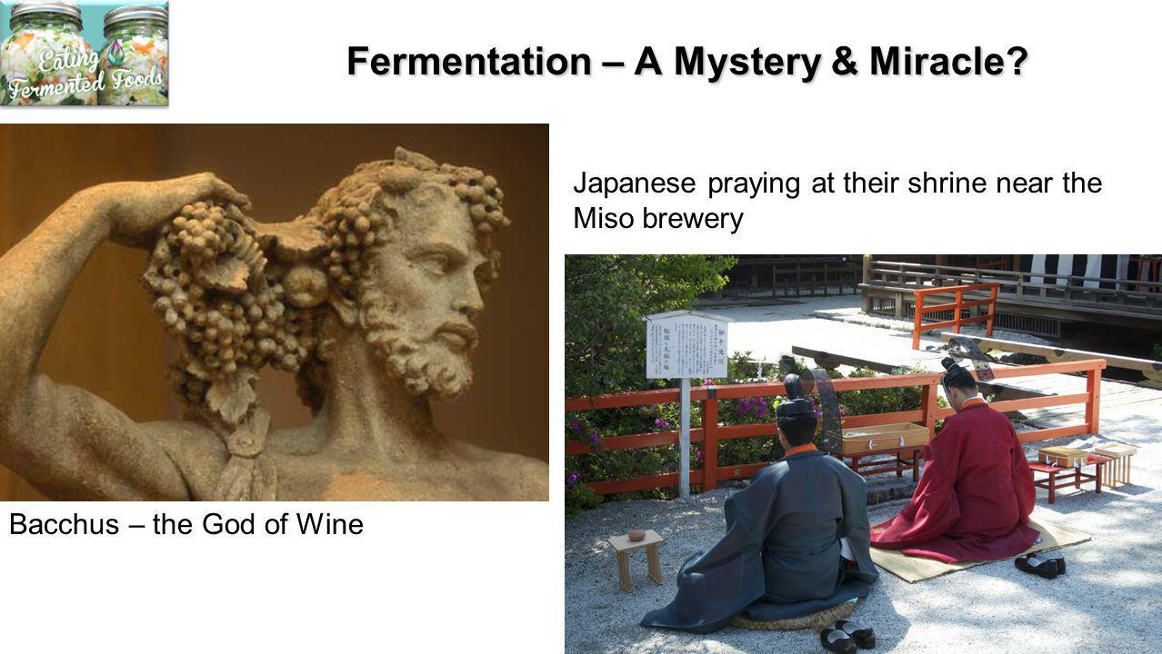 Fermentation – A Mystery & Miracle