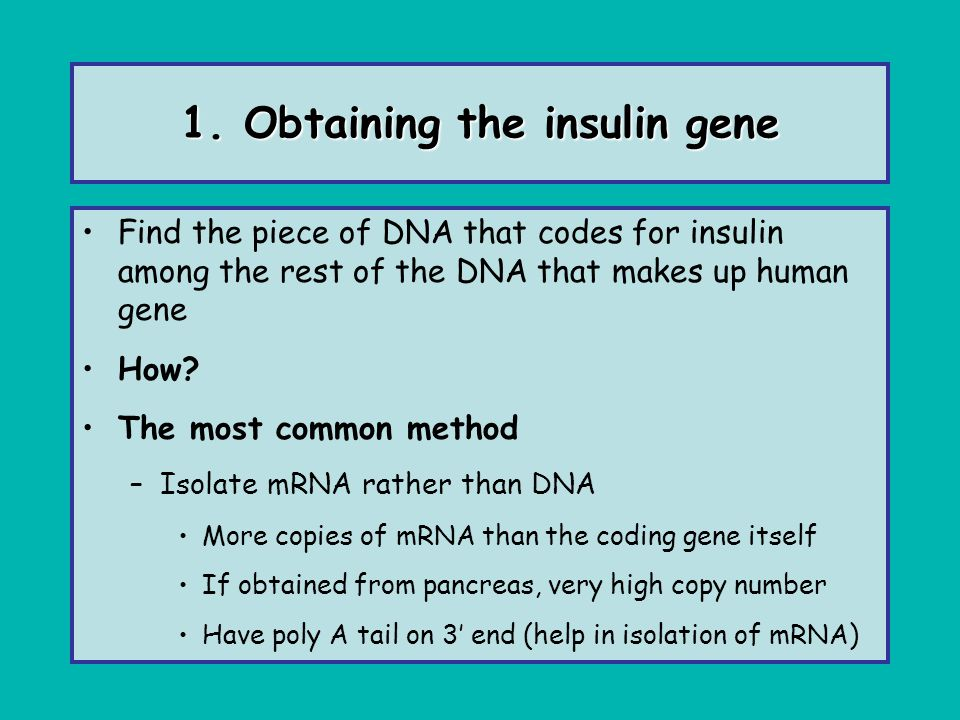 1. Obtaining the insulin gene