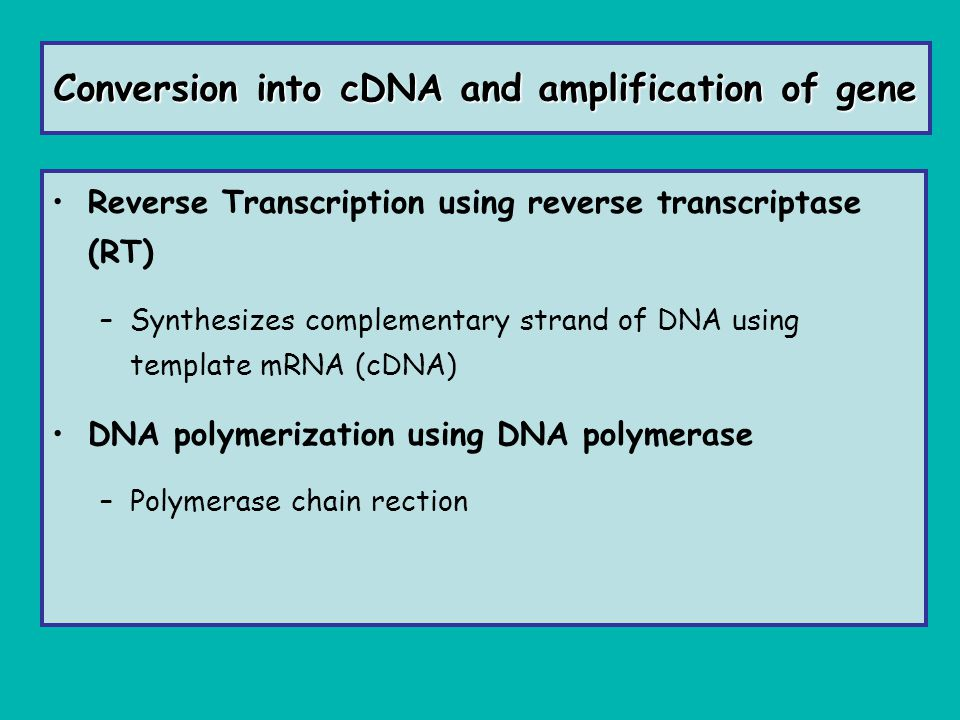 Conversion into cDNA and amplification of gene