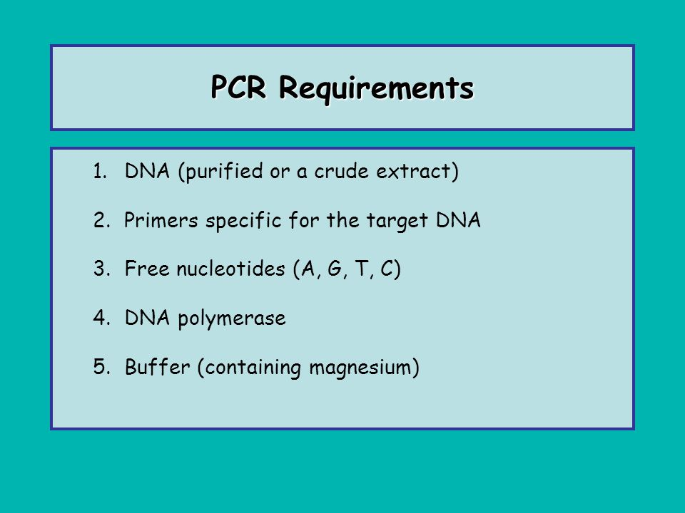 PCR Requirements DNA (purified or a crude extract)