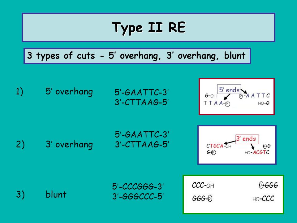 Type II RE 3 types of cuts - 5' overhang, 3' overhang, blunt