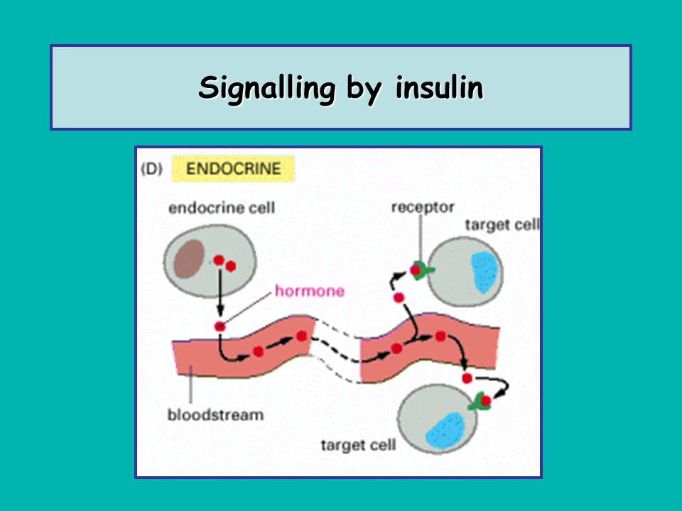 Signalling by insulin