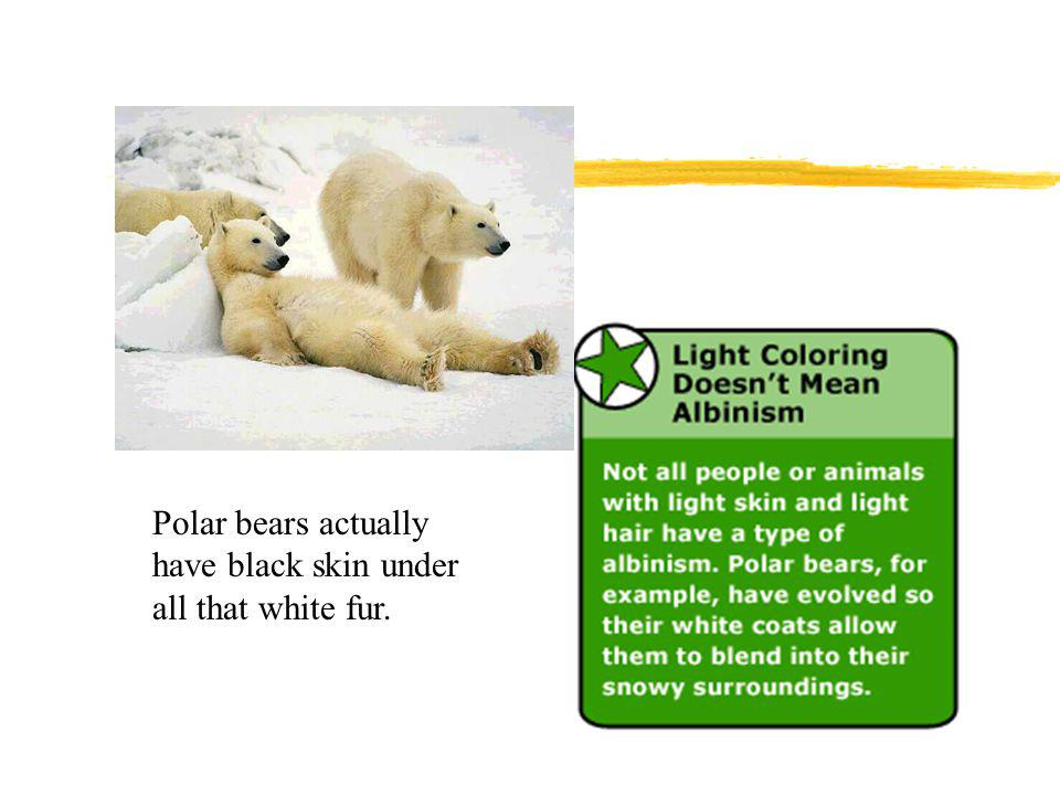 Polar bears actually have black skin under all that white fur.