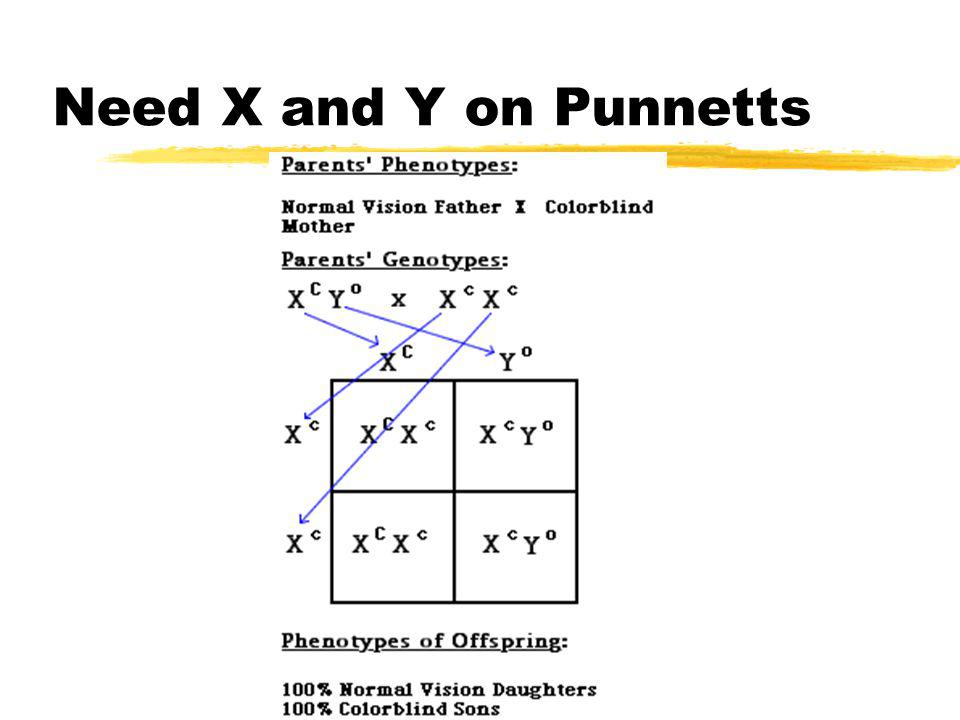 Need X and Y on Punnetts