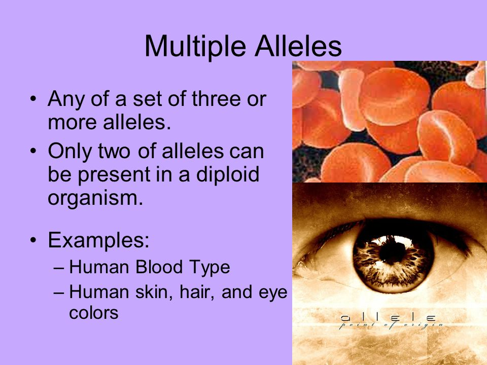 Multiple Alleles Any of a set of three or more alleles.