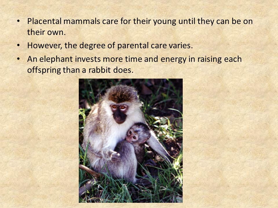 Placental mammals care for their young until they can be on their own.