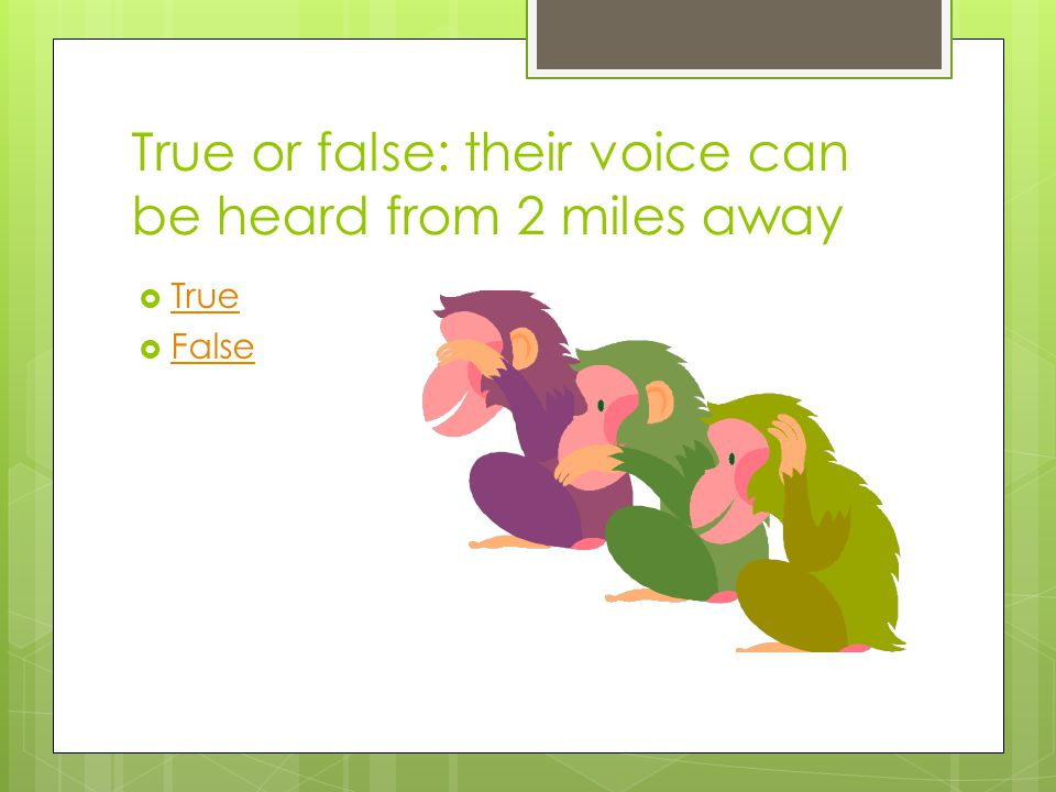 True or false: their voice can be heard from 2 miles away