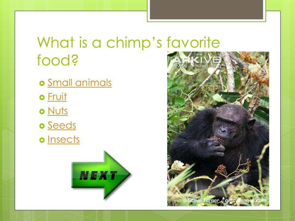 What is a chimp's favorite food